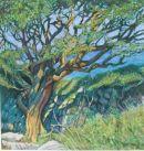 Hill Hawthorn
