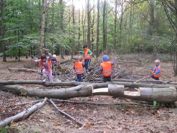 Woodland Play 2