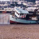 On the tide line