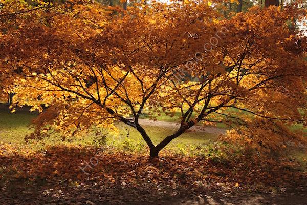 autumn is golden