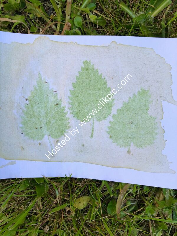 wild garlic anthotype with nettle leaves