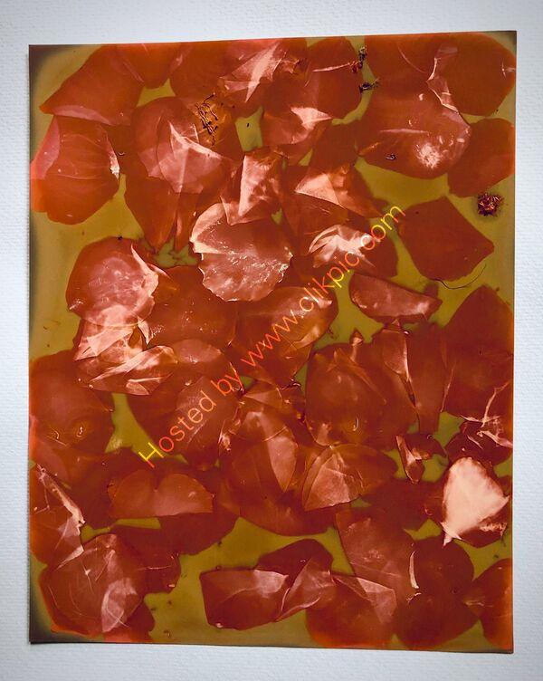 lumen print petals
