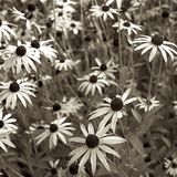 Abbey Gardens Lacock