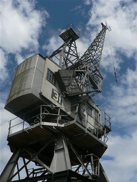 crane 31