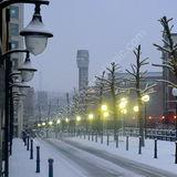 snowlit avenue