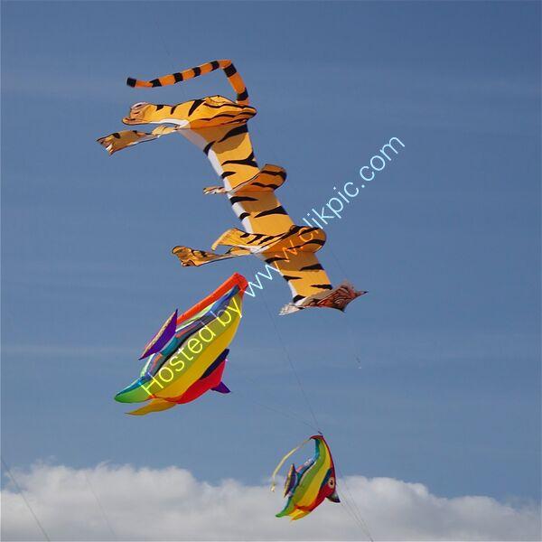 Flying tiger flying fish