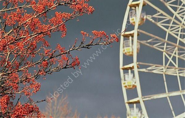 turning autumnal