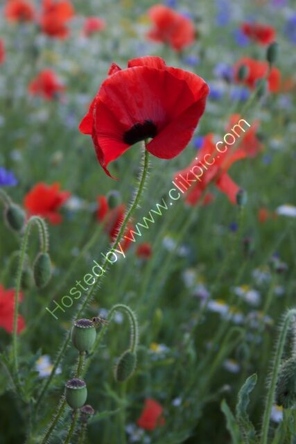 wildflower mini meadow