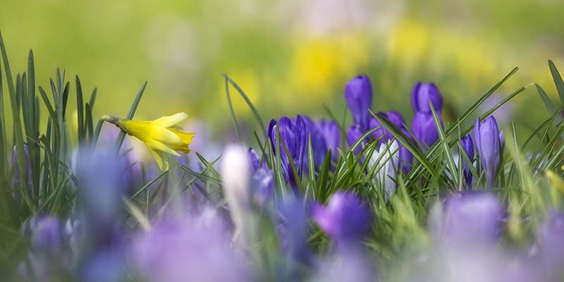 1186 Spring Bulbs