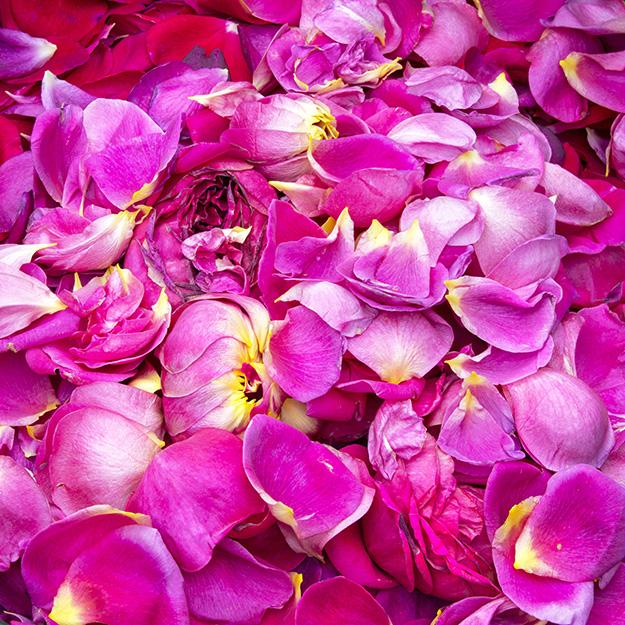 1221 Rose Petals