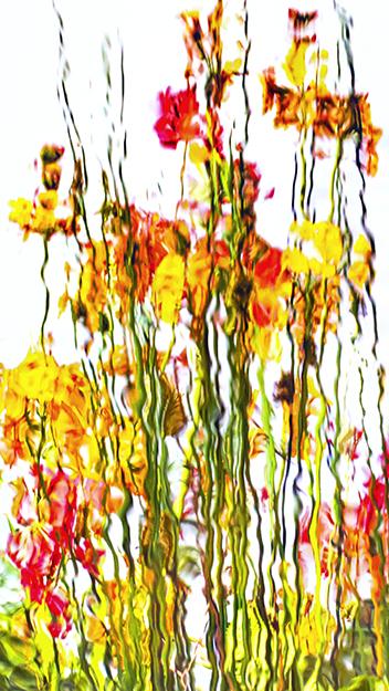 2083  Primula abstract 2