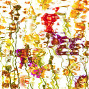 2091  Primula abstract 1