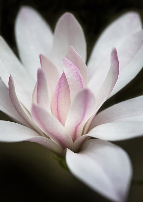 2309 Magnolia