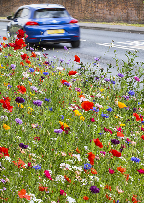 Urban Roadside flower meadow
