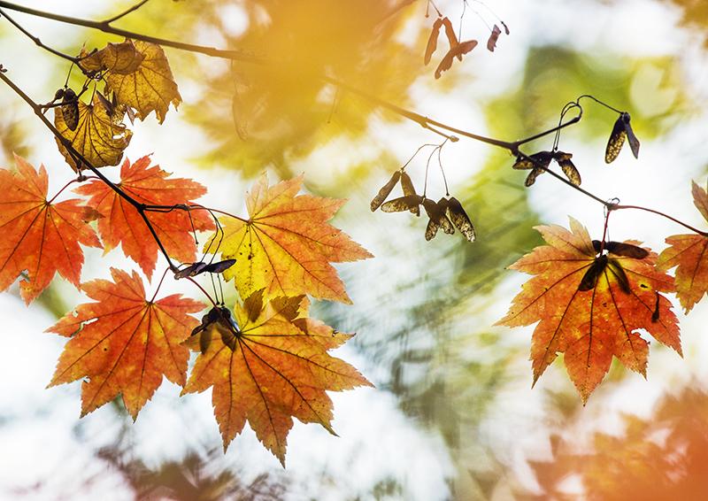 6174 Autumnal / Fall foliage