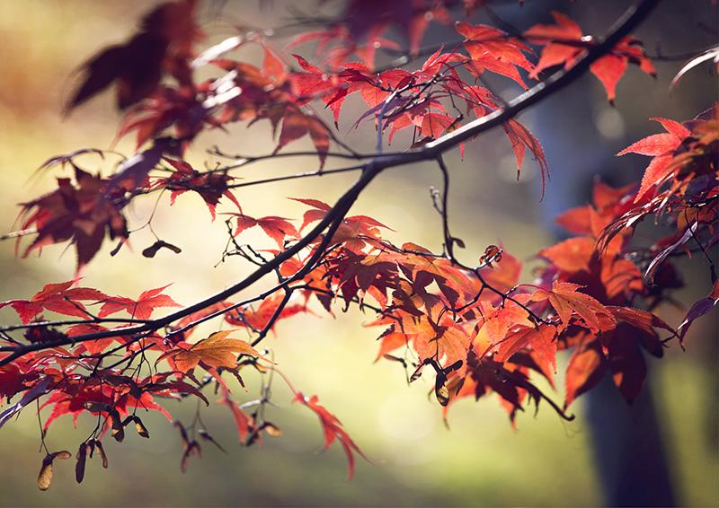 6176 Autumnal / Fall foliage
