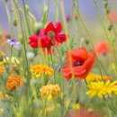 7689 Flower Meadow 2