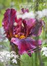 9361 Iris