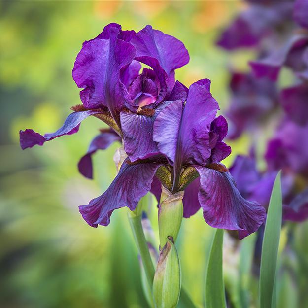 9405 Iris