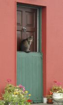 Cat on door