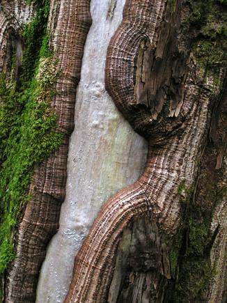 Glencoe oak wood