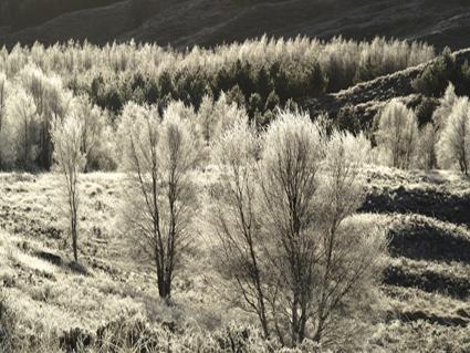 Hoar frost in Glen