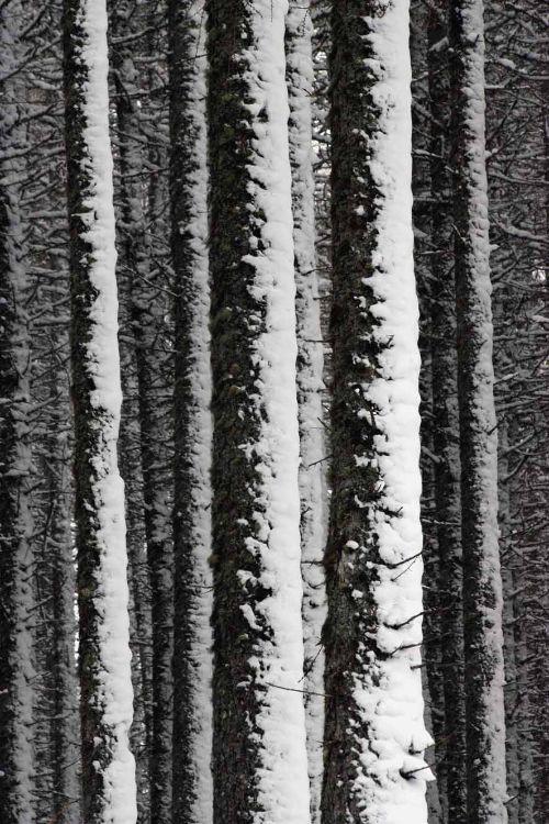 Lael Forest near Ullapool