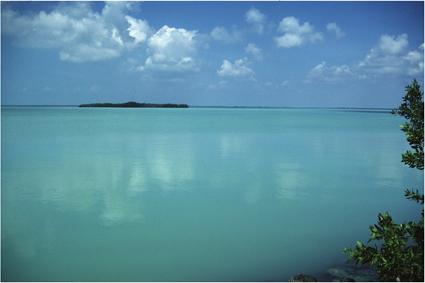 Lagoon South Florida