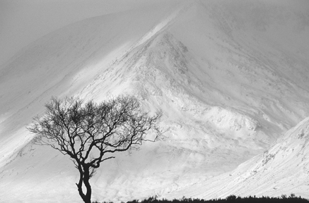 Mountain Ash and Black Mount