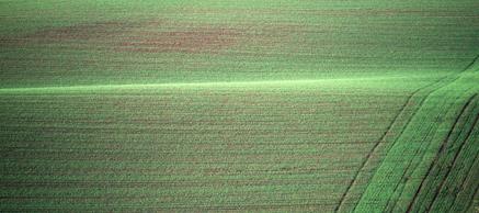 Northumberland field