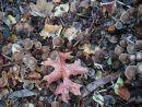 Senescent leaves and fungi
