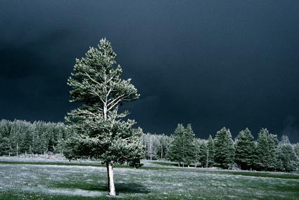 Snow storm Yellowstone National Park
