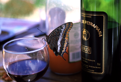 Butterfly and wine