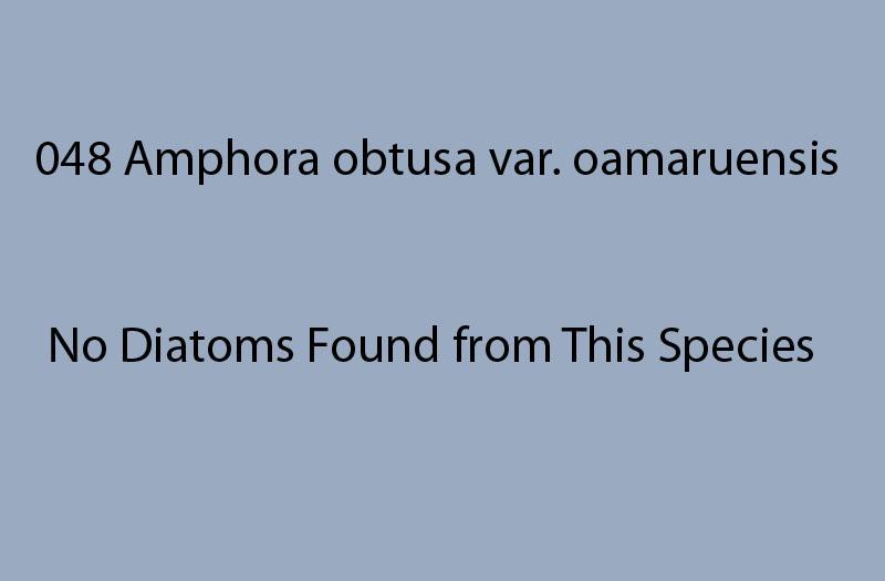 048Amphora obtusa var. oamaruensis<br> No diatoms found from this species