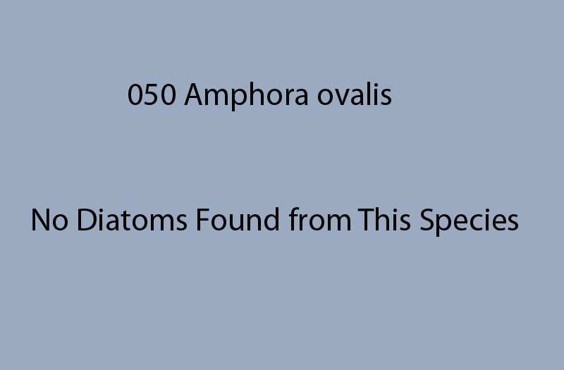 050 Amphora ovalis No diatoms<br> found from this species
