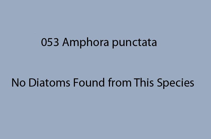 053 Amphora punctata <br> No diatoms found from this species