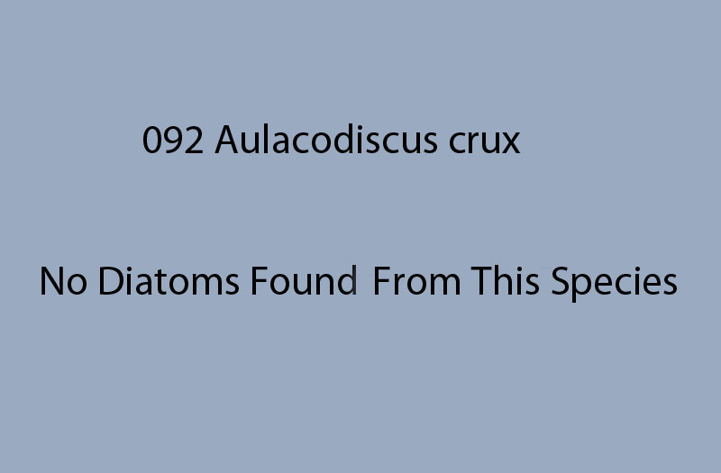 092 Aulacodiscus crux. No diatoms found from this species.