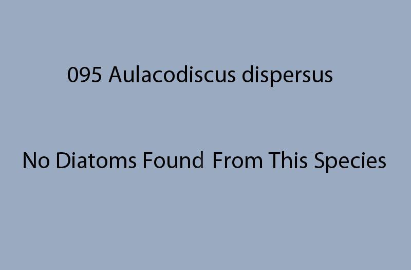 095 Aulacodiscus dispersus. No diatoms found from this species