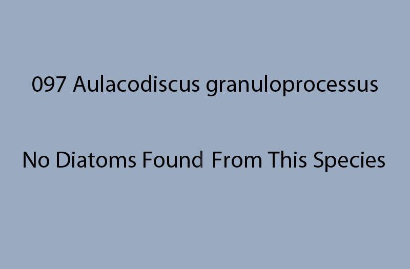097 Aulacodiscus granuloprocessus. No diatoms found from this species