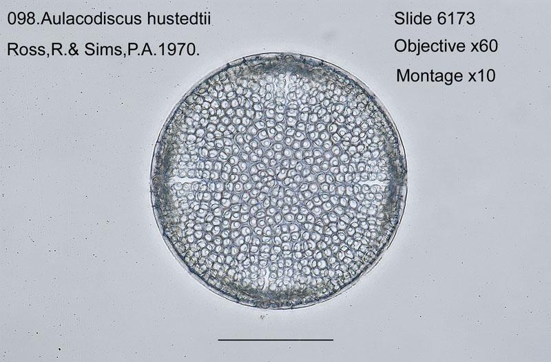 098 Aulacodiscus hustedtii