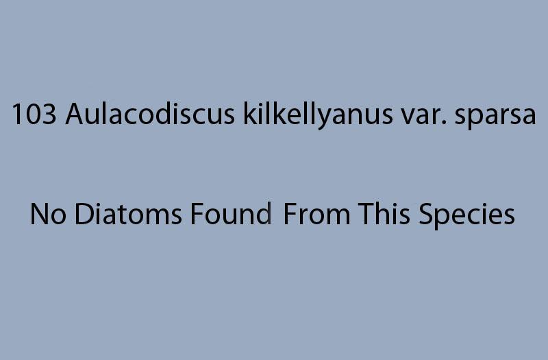 103 Aulacodiscus kilkellyanus var. sparsa. No diatoms found from this species.