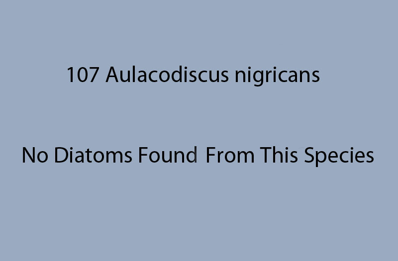 107 Aulacodiscus nigricans. No diatoms found from this species.