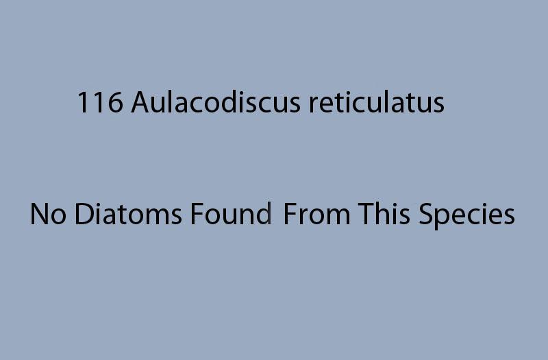 116 Aulacodiscus reticulatus. No diatoms recorded from this species.