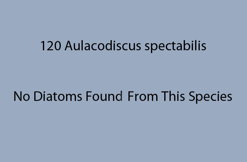 120 Aulacodiscus spectabilis. No diatoms recoreded from this species.