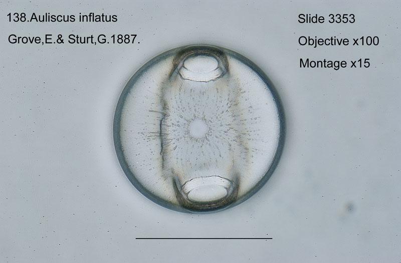 138 Auliscus inflatus