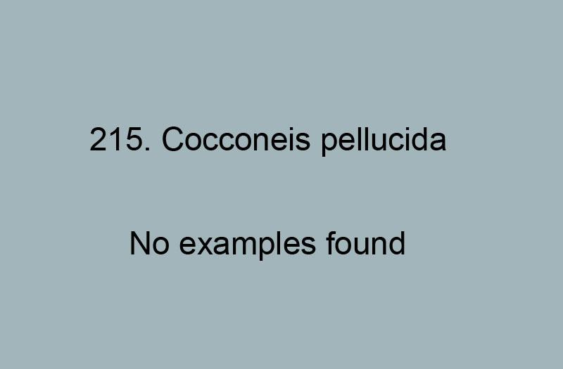 215. Cocconeis pellucida No records