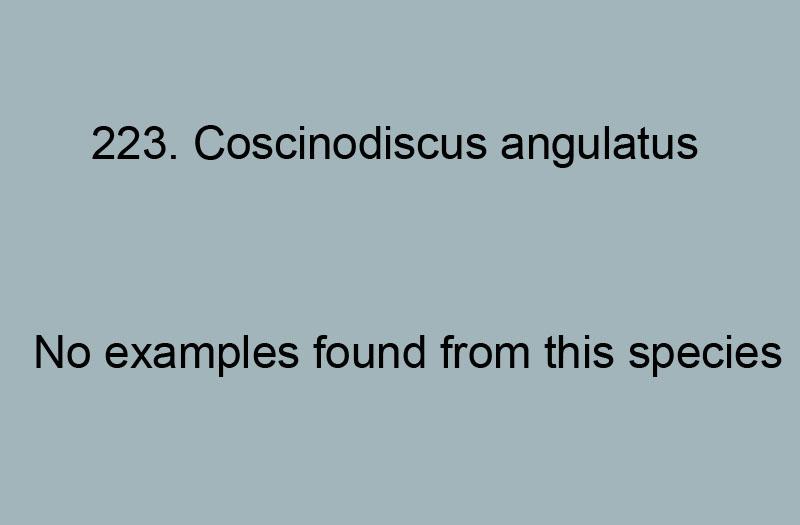 223. Coscinodiscus angulatus