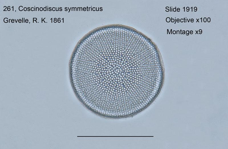 261. Coscinodiscus symmetricus