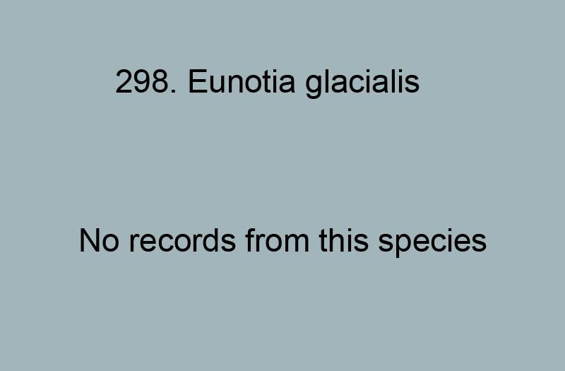298. Eunotia glacialis