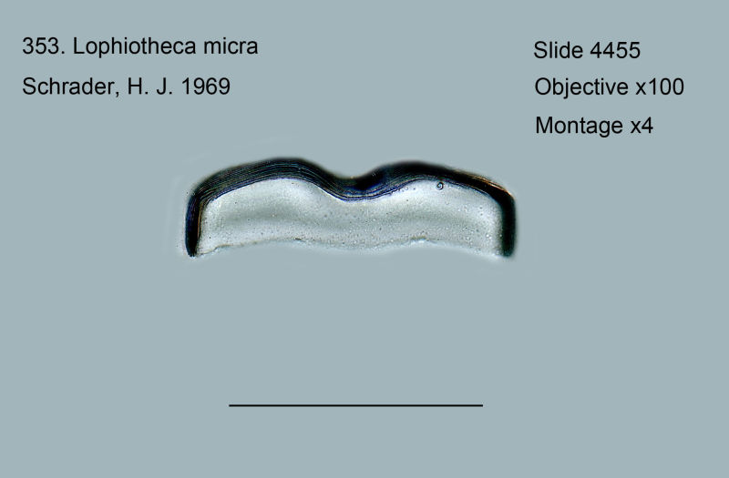 353. Lophiotheca micra